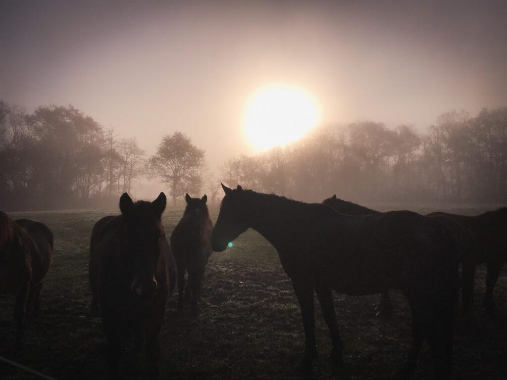 les chevaux nous accompagnent